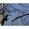 Спил и обрезка деревьев Арбористами